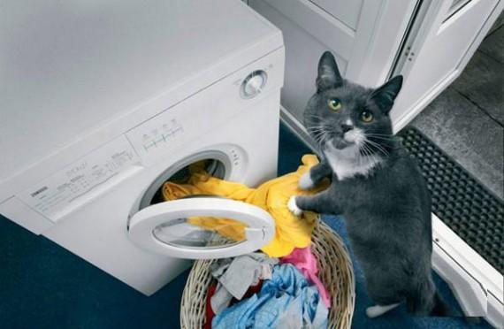 House_Cat_Using_The_Washing_Machine