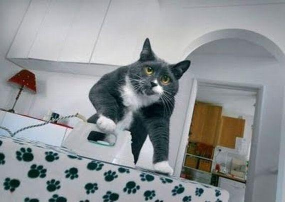 Ironing-cat